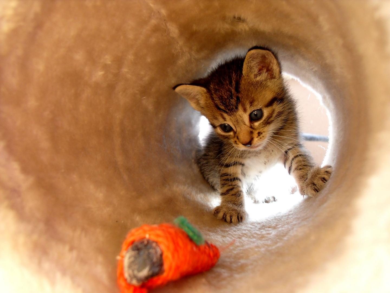 Im Tunnel 2