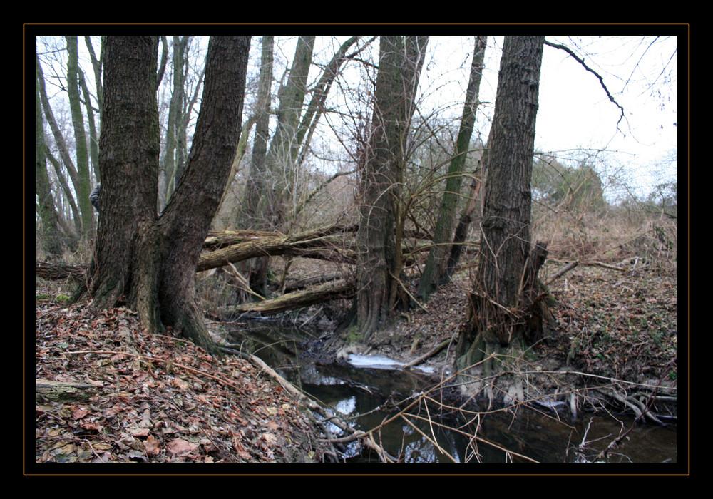 Im Unterholz