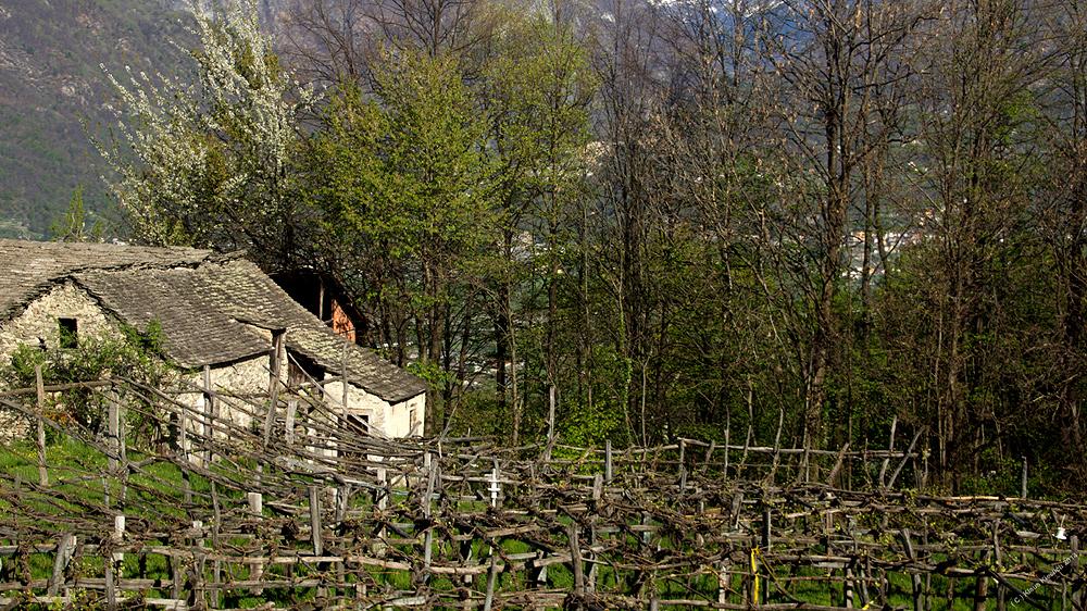 Im Valle Vigezzo.....