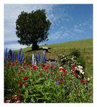im vergangenen Sommer in Südtirol...