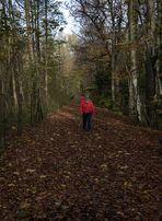 """Im Visier """"Herbst in allen Schattierungen"""""""