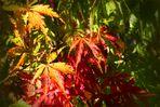 Im Visier *Herbst in allen Schattierungen*