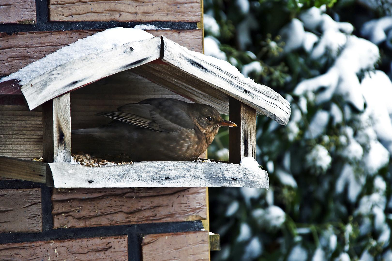 im Vogelhaus