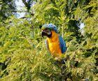 Im Vogelpark 2