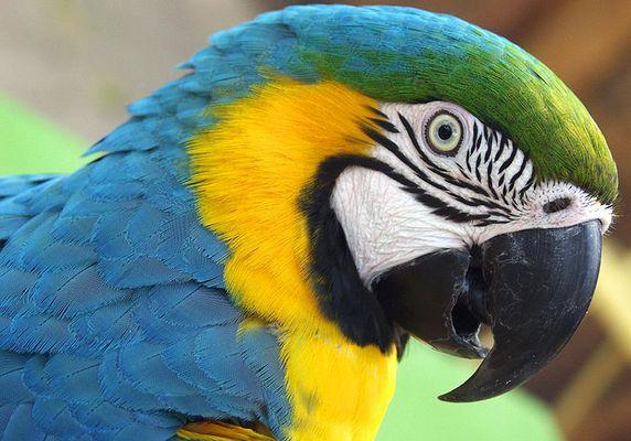 im Vogelpark Foz do Iguacu