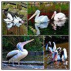 Im Vogelpark Walsrode . . . .