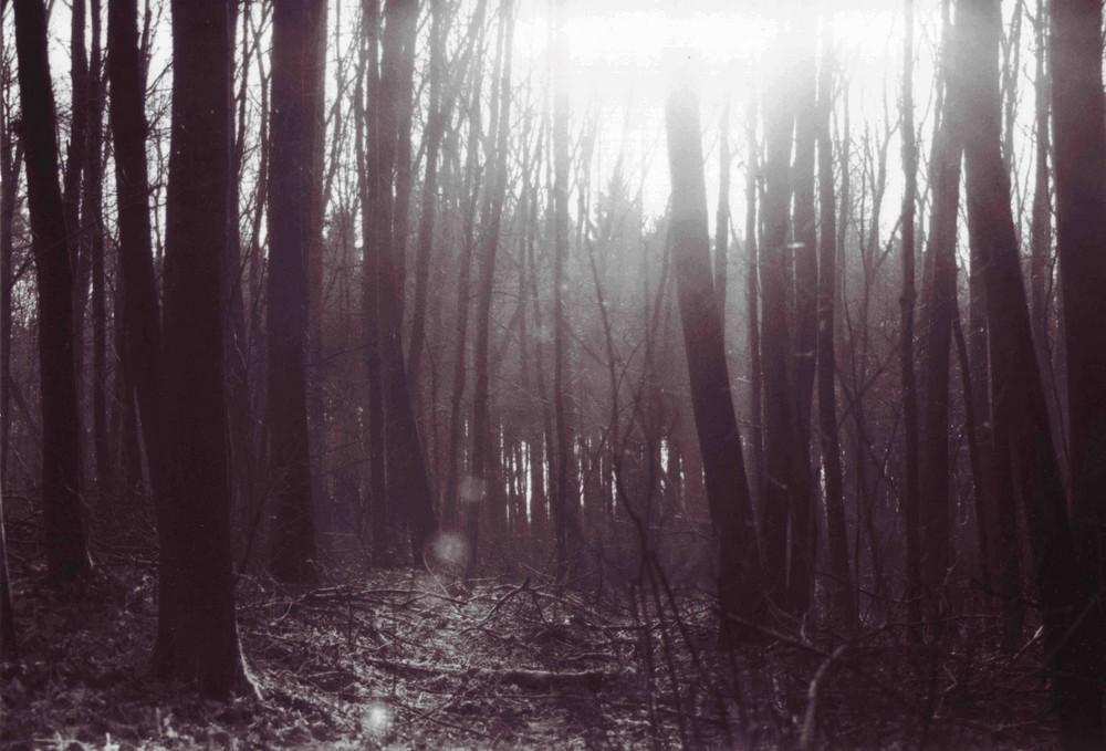 ...im Wald...