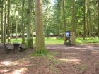 Im Wald (?)
