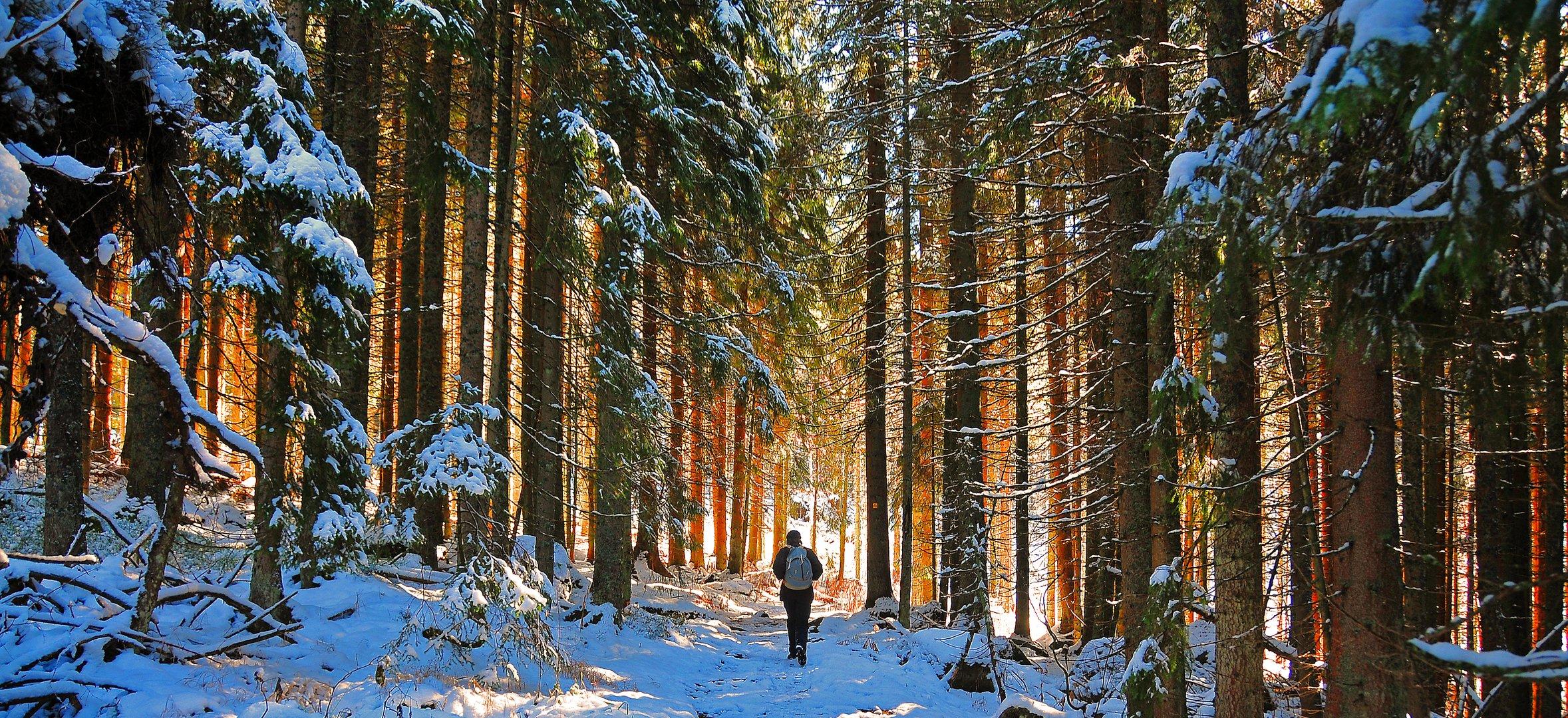 ... im Wald ....