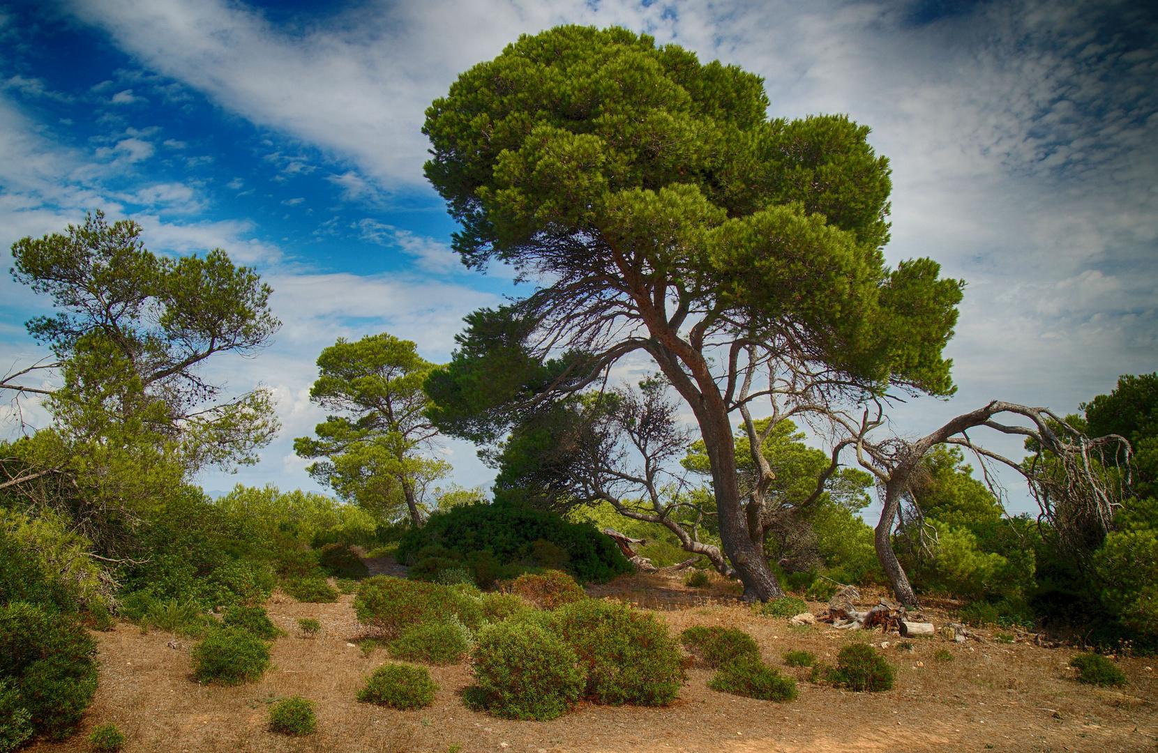 Im Wald auf Mallorca