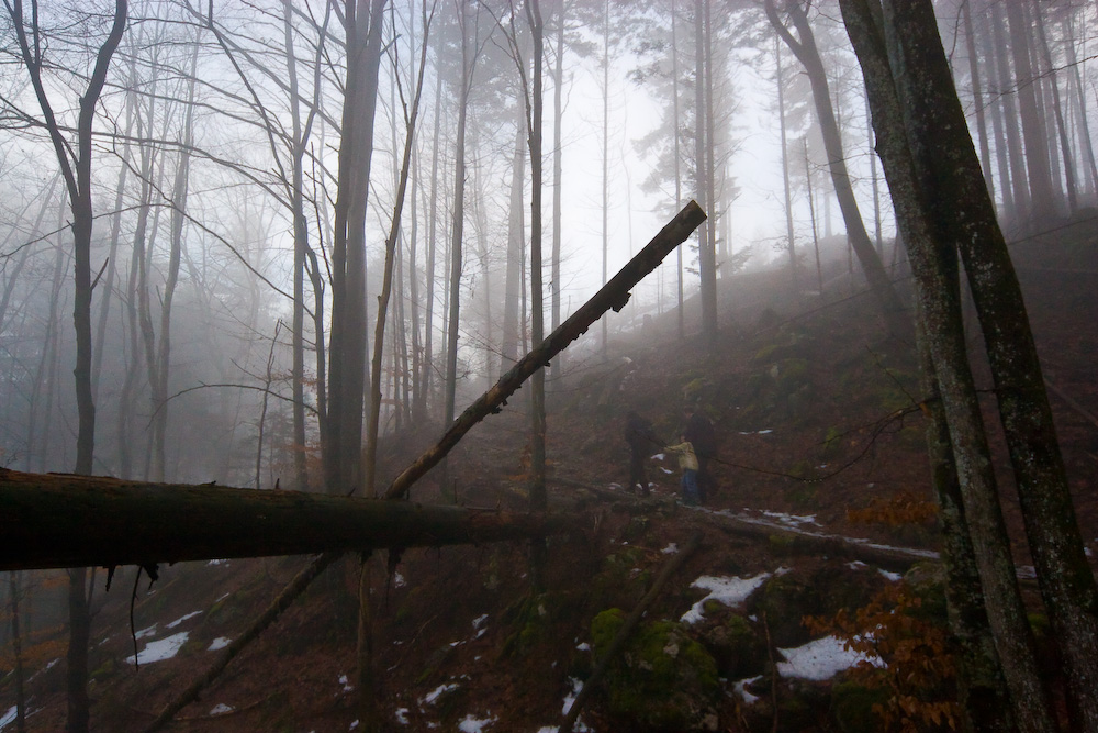 Im Wald...