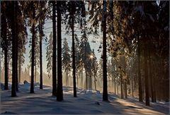 Im Wald bei Heiligenborn