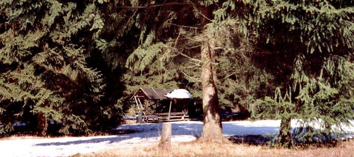 Im Wald, da steht Sie...die Hütte