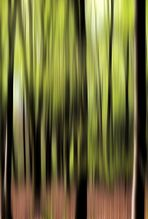Im Wald das frische Grün ! - 2