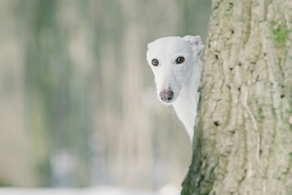 Im Wald .....