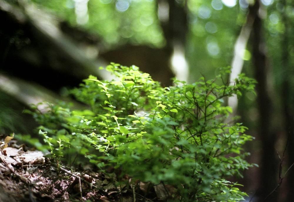 Im Wald gefunden