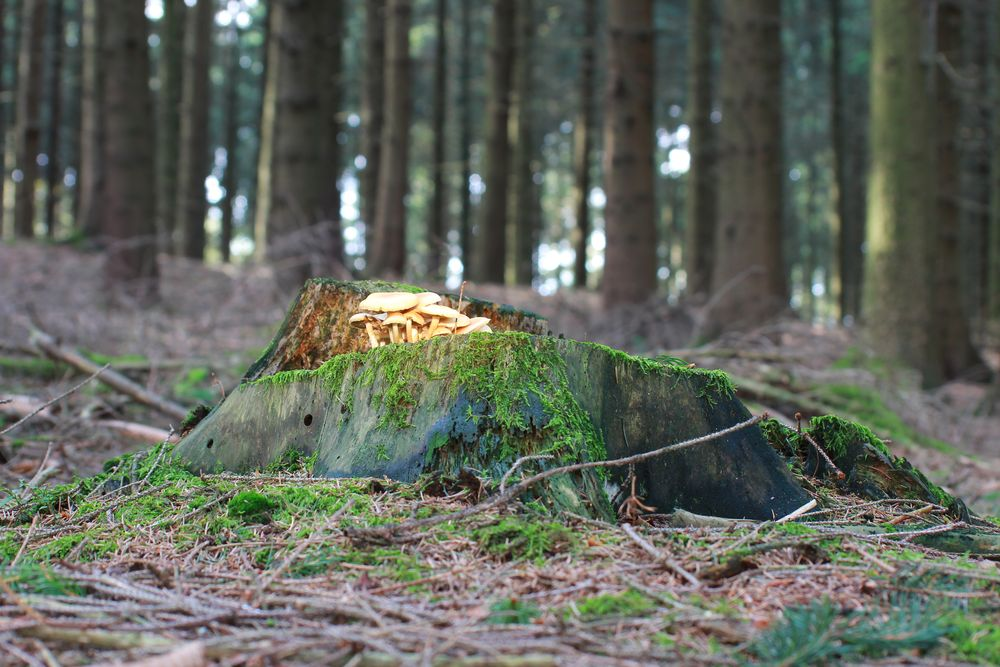 Im Wald gesehen 2