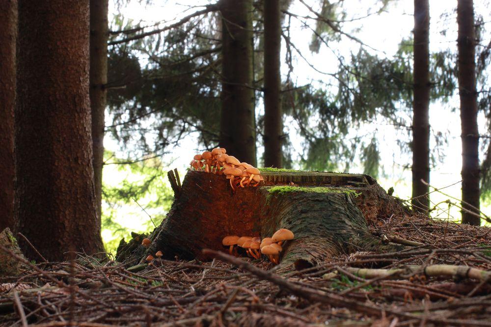 Im Wald gesehen
