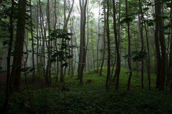 im Wald  | Hügelgrab im Hainesch Iland