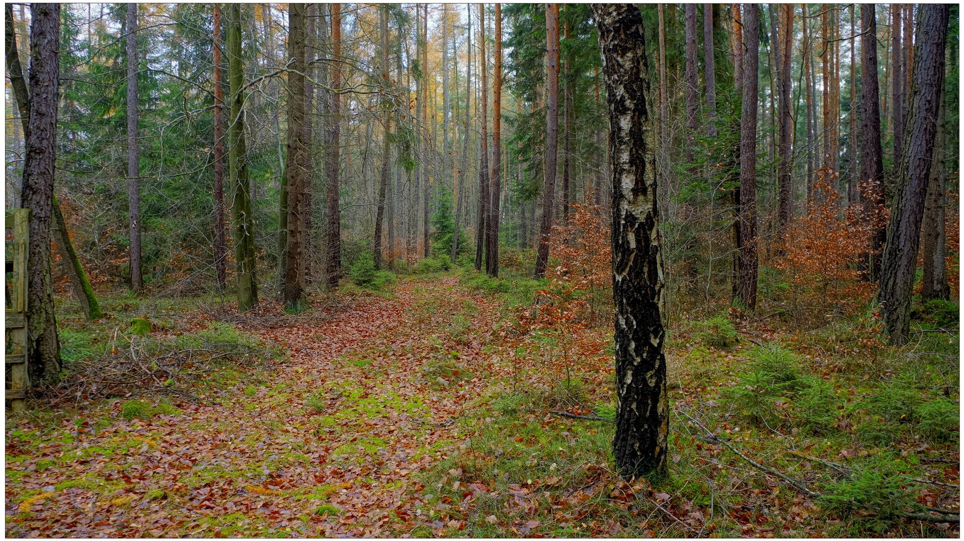 Im Wald II (en el bosque II)