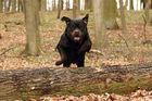 Im Wald mit Henk