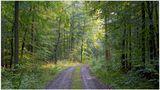 im Wald nach dem Regen (en el bosque después de la lluvia) von Hartmut Stahl