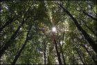 Im Wald reichen sich alle Bäume die Äste