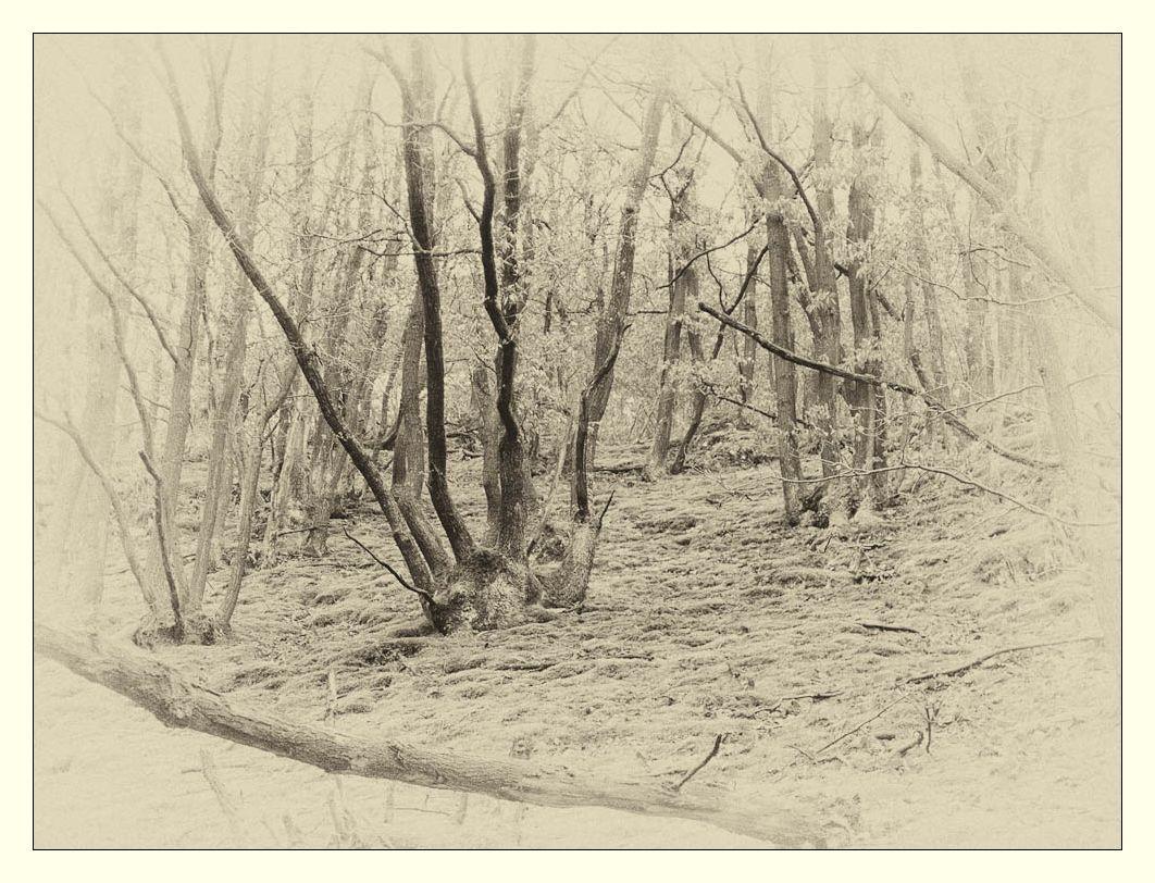 im Wald s/w
