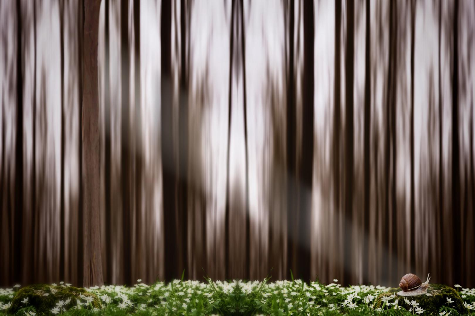 Im Wald und auf der Ha-Heide...