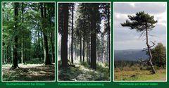 Im Wald und auf der Heide