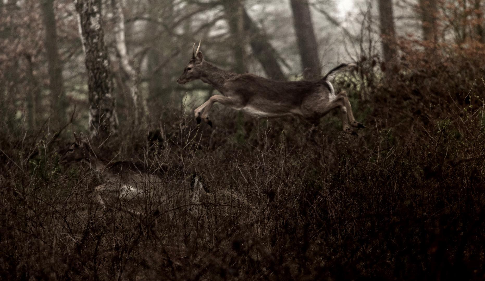 Im Wald und auf der Heide... (2)