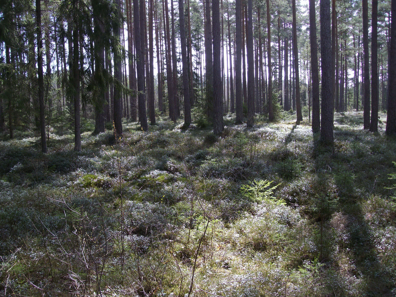 Im Wald und Moos – da ist was los!