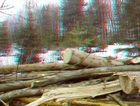Im Wald unterwegs