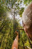 Im Wald vom Lake Matheson