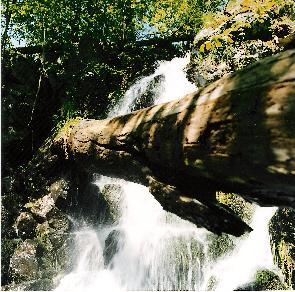 Im Walde rauscht der Wasserfall