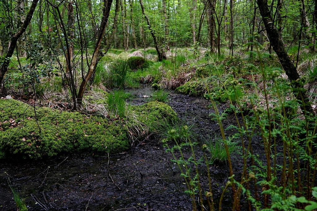 Im Waldmoor