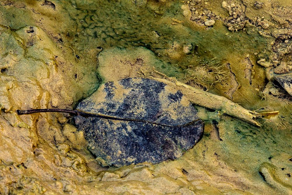 Im Wassergraben ein altes Blatt