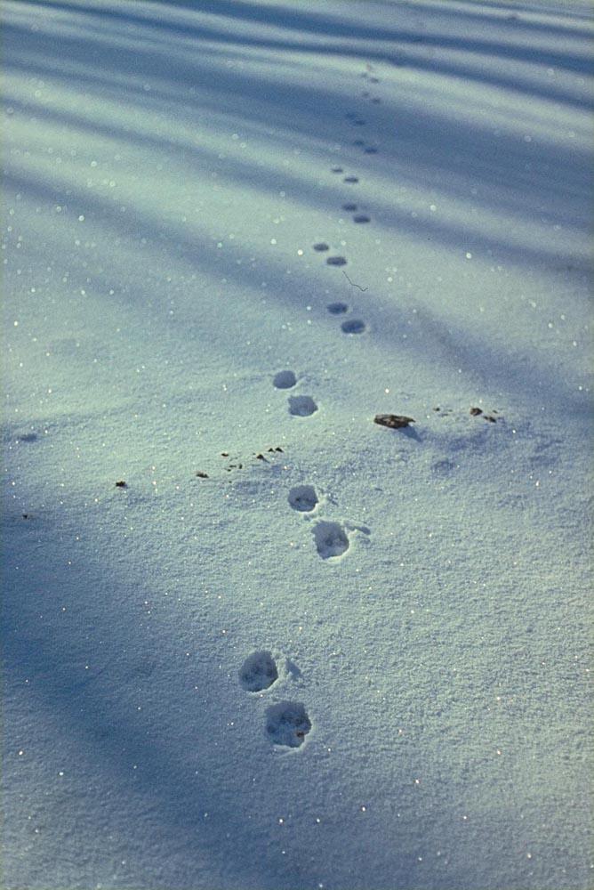 Im Winter 1