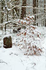 ...im Winterwald
