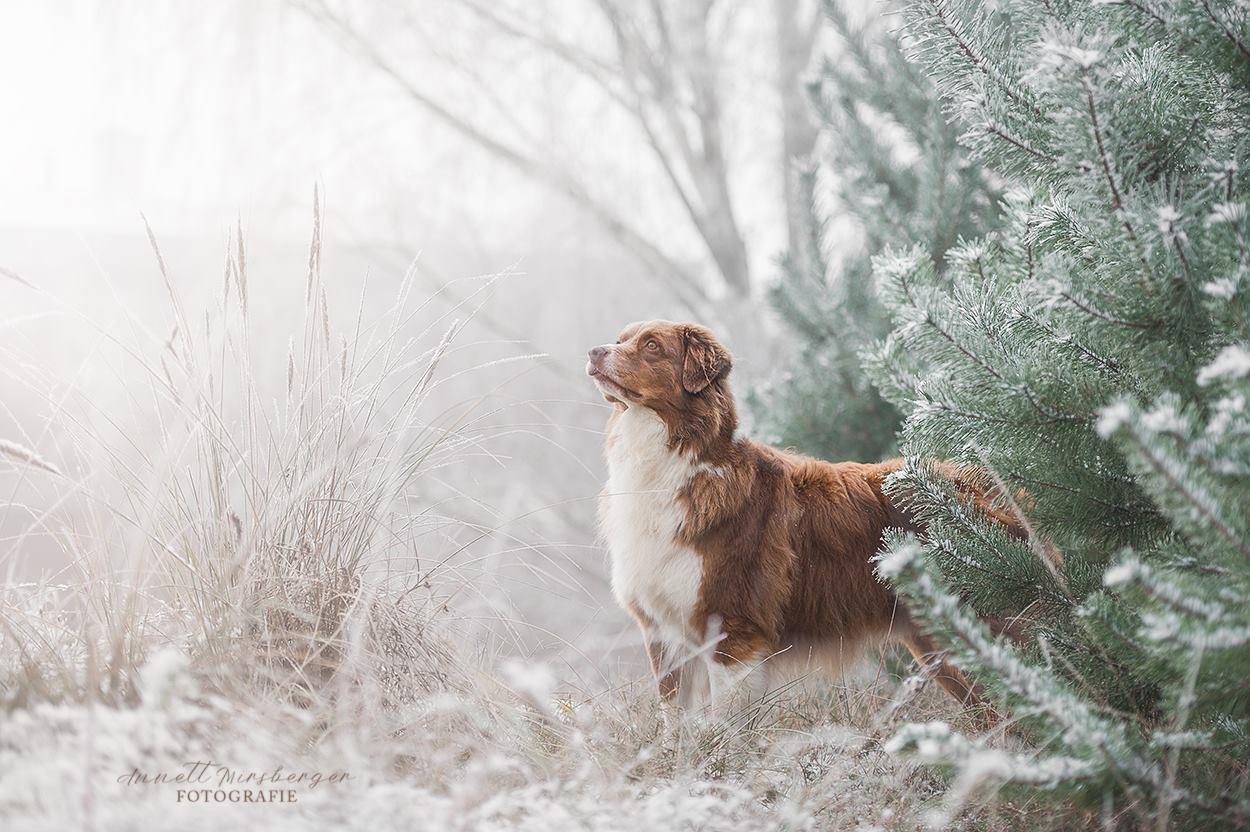 Im Winterwald...