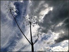 Im Wolkenlicht...