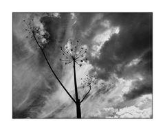 Im Wolkenlicht II.