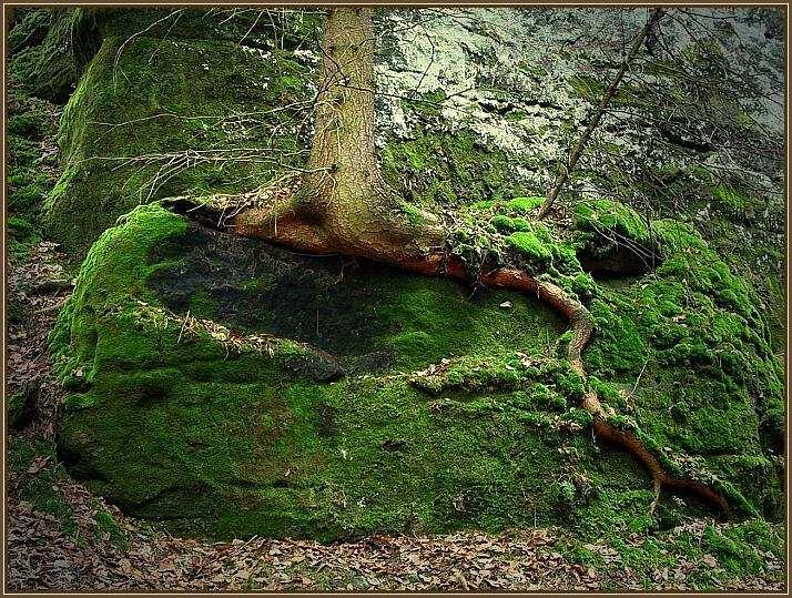 Im Zauberwald (2)