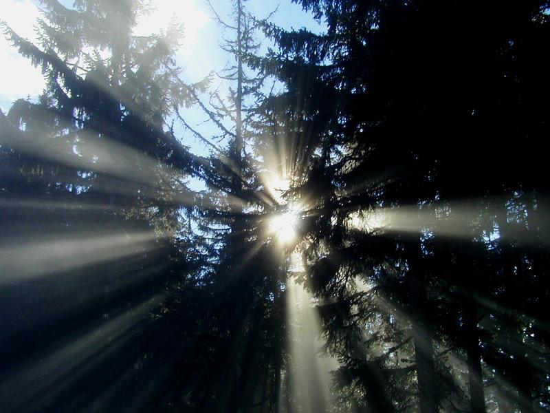 Im Zauberwald ...
