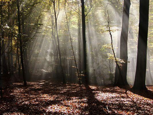 Im Zauberwald -da könnten...