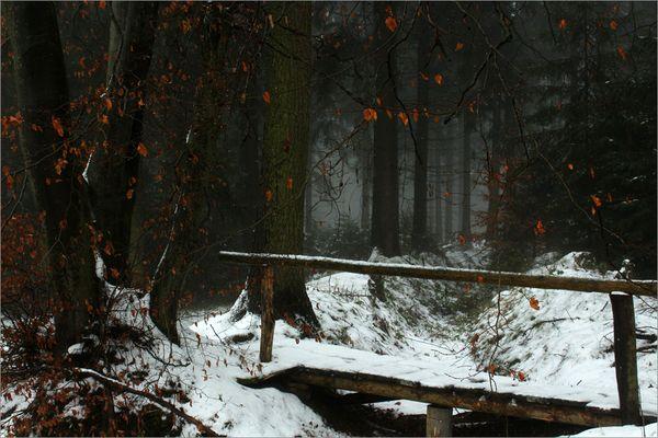 Im Zauberwald