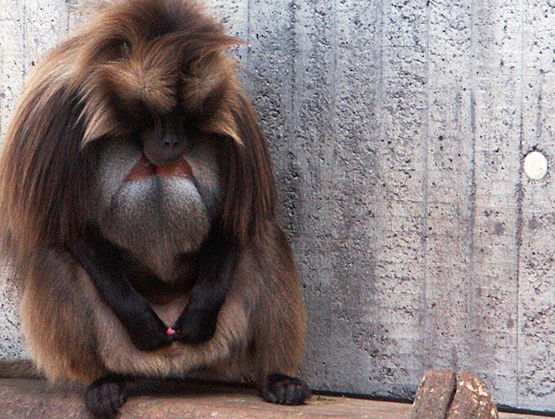 Im Zoo 11 (FSK 18)