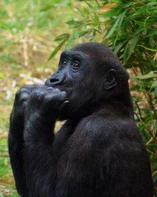Im Zoo - Affen