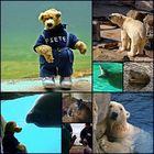 Im Zoo am Meer