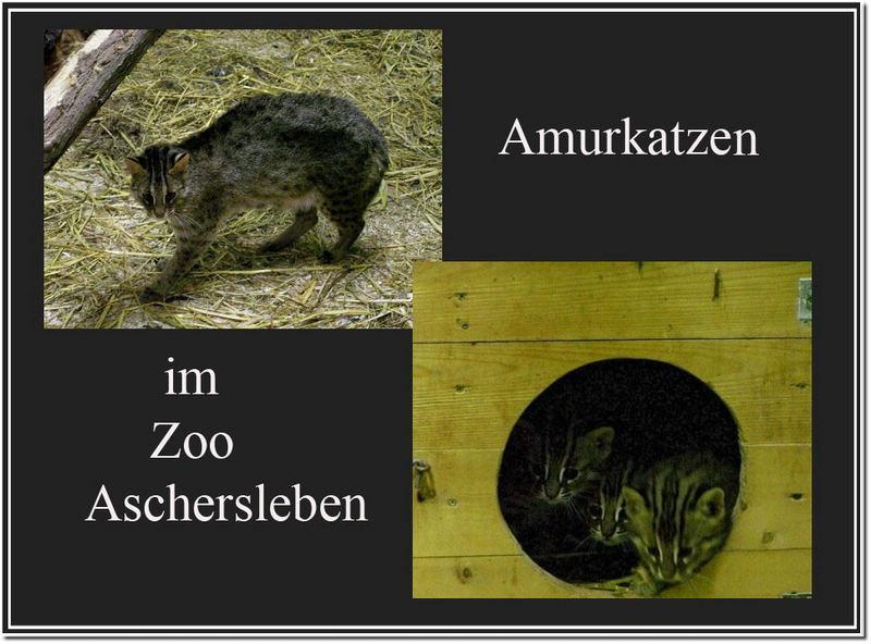 Im Zoo Aschersleben